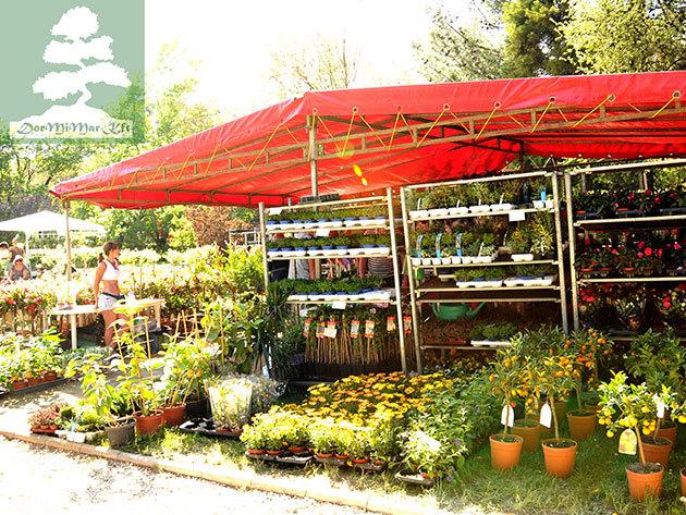 Napi belépőjegy a Corvinus Díszkert Kertészeti és Gasztronómiai Szakkiállítás és vásárra egy fő felnőtt számára (18 év feletti személy)