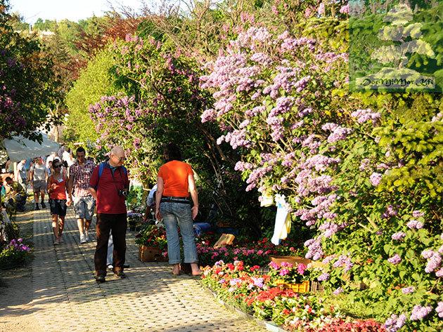 Corvinus Díszkert Kertészeti és Gasztronómiai Szakkiállítás és Vásár - belépő a tavasz legszínesebb programjára