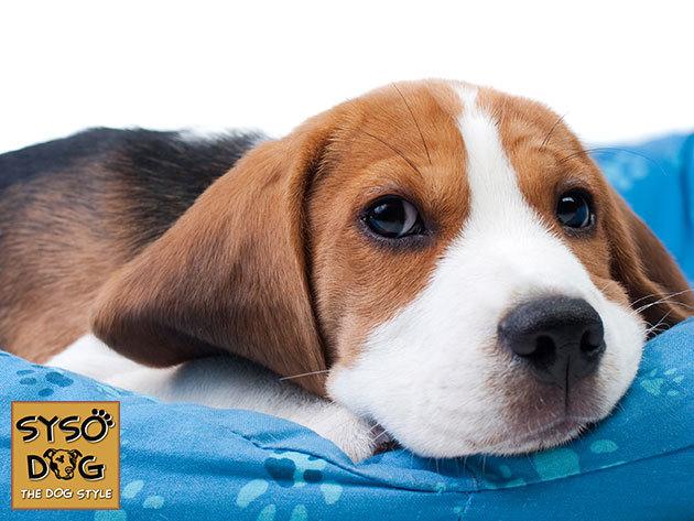 Kutyapárna több méretben - kényeztesd kedvencedet kényelmes, strapabíró vászon huzatú, tisztítható fekhellyel