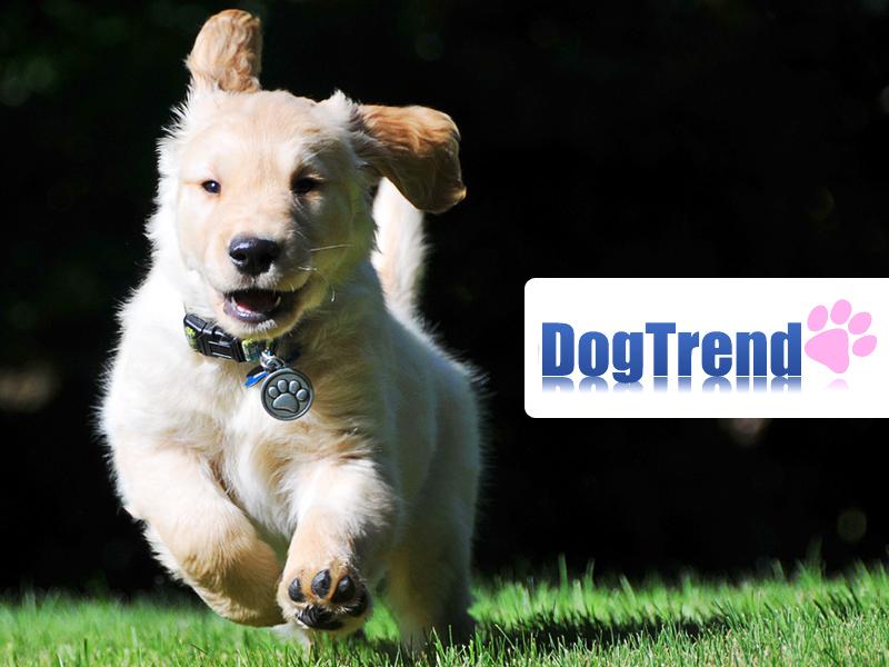 Gondoskodj kutyádról, macskádról a legjobb minőségű tápokkal, akár 50% kedvezménnyel!