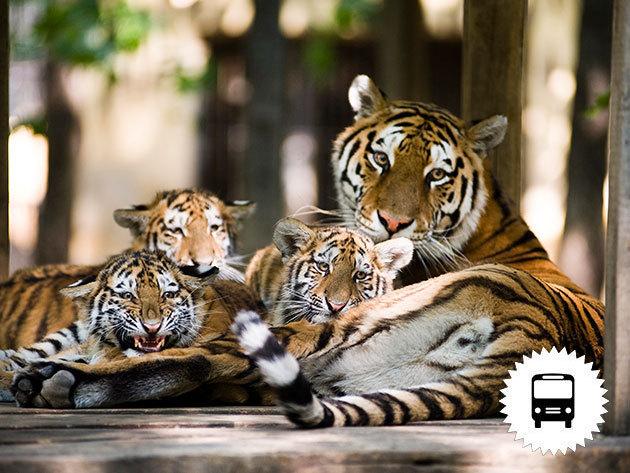 Gyermeknapi program a Nyíregyházi Állatparkban és Skanzenben - buszos utazás május 27-én