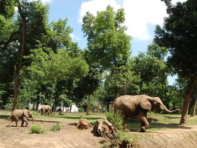 Gyermeknapi program a Nyíregyházi Állatparkban és Skanzenben