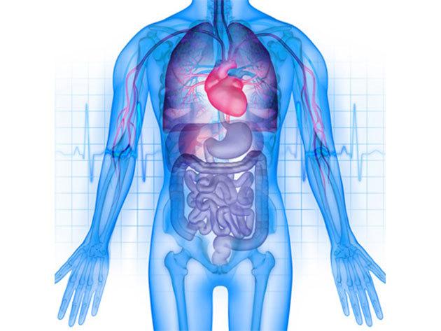 Megtisztulás a baktériumoktól, vírusoktól, parazita irtás + vérnyomás mérés, vércukorszint és EKG vizsgálat / fő