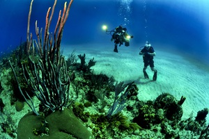 Divers-scuba-reef-underwater-37542_middle