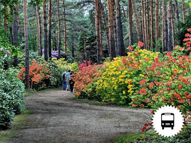 Rododendron virágzás a Kámoni Arborétumban vagy a Jeli varázskertben, Léka vára és Kőszeg, buszos utazás májusban / fő
