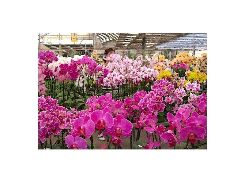 2018. május 5. Anyák napi határtalan barangolás az Őrségben - Látogatás a dobronaki orchideafarm-on /fő