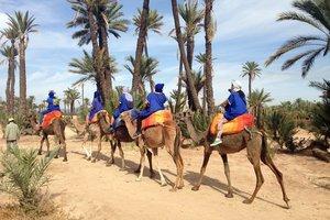 Camellos-marrakech_middle