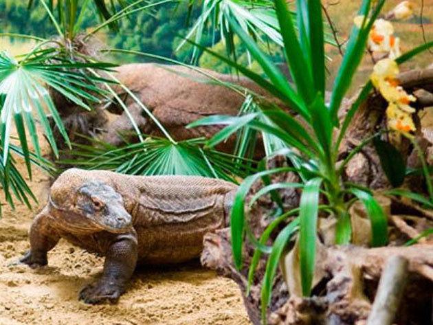 Állatkerti látogatás vagy fürdőzés Nyíregyházán! Buszos kirándulás 2018. október 30. (kedd, őszi szünet) /fő