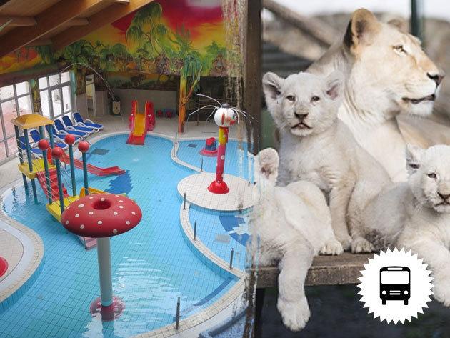 Nyíregyháza, állatkerti látogatás vagy fürdőzés - buszos kirándulás az őszi szünetben /fő