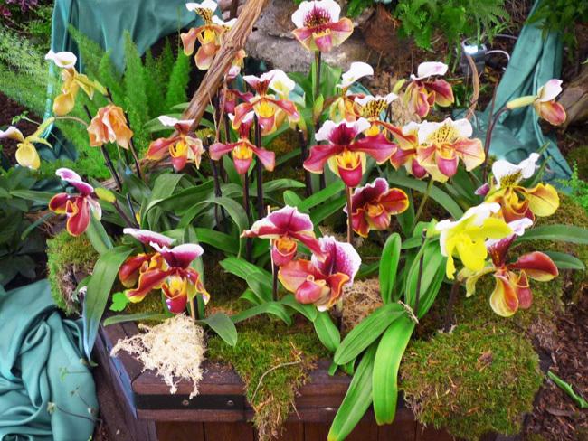 2019. március 24. Klosterneuburg kolostor és a Nemzetközi Orchidea kiállítás: non-stop autóbuszos utazás Ausztriába / fő