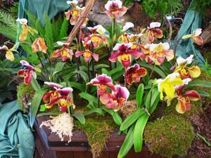 Orchideak_middle