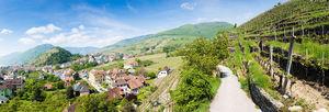 Csm_wg_17_visit_wineries_wachau_11_53bdf24420_middle