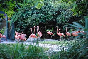 Flamingo_vienna_zoo_sch_nbrunn_2010_middle