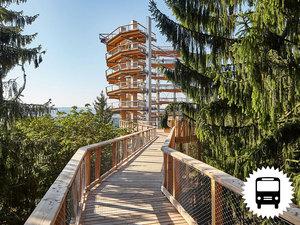Treetop-walk-magasm-tatra-buszos-utazas_middle