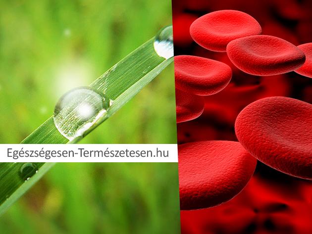 Tudd meg milyen állapotban van a szervezeted a teljes körű vérkép elemzés segítségével!