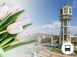 Tulipan-viragzas-buszos-utazas_middle