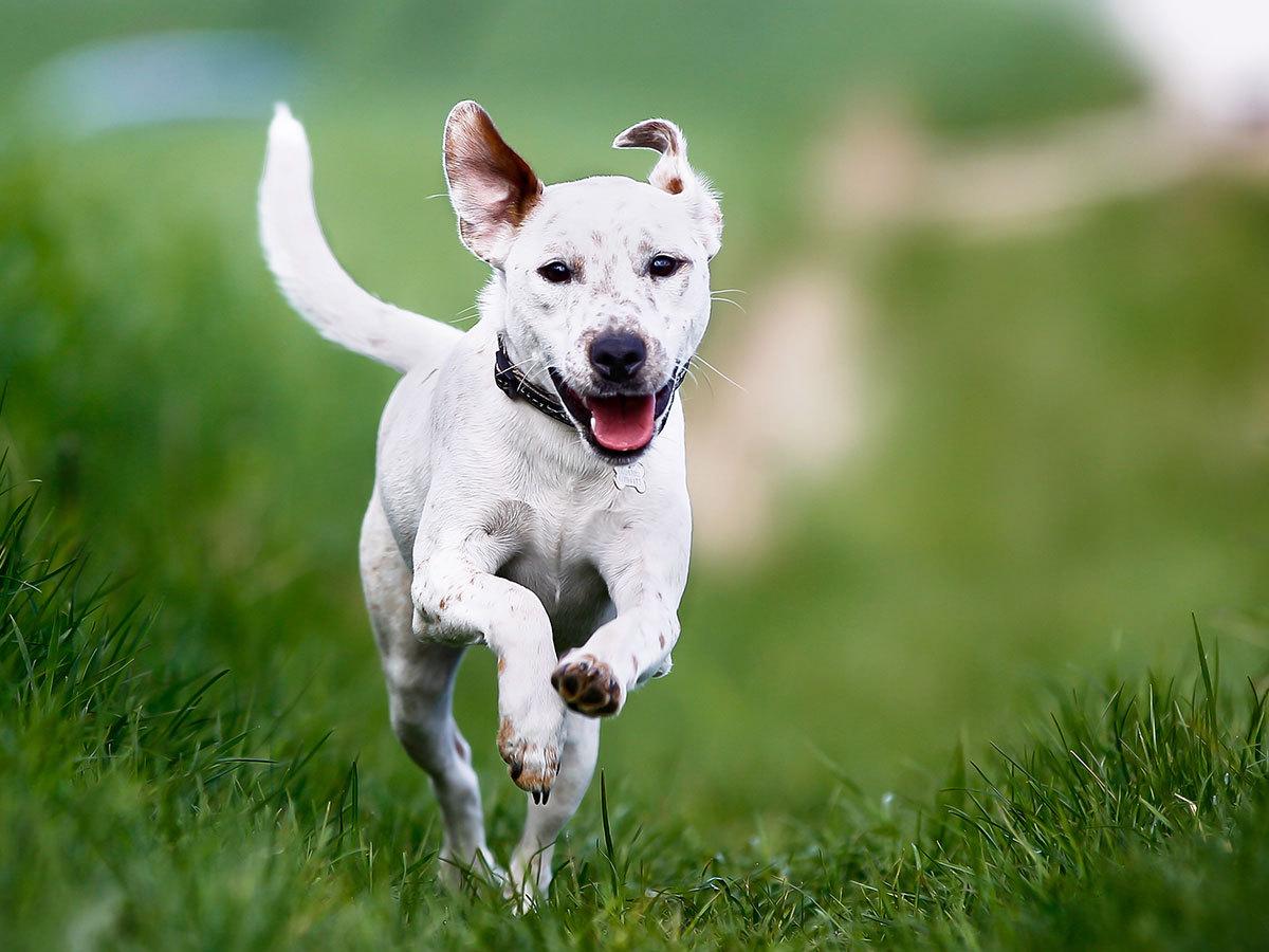 Műnyulas kutyafuttatás a Hármashatár-hegyen / szuper program a négylábúnak és a gazdának egyaránt