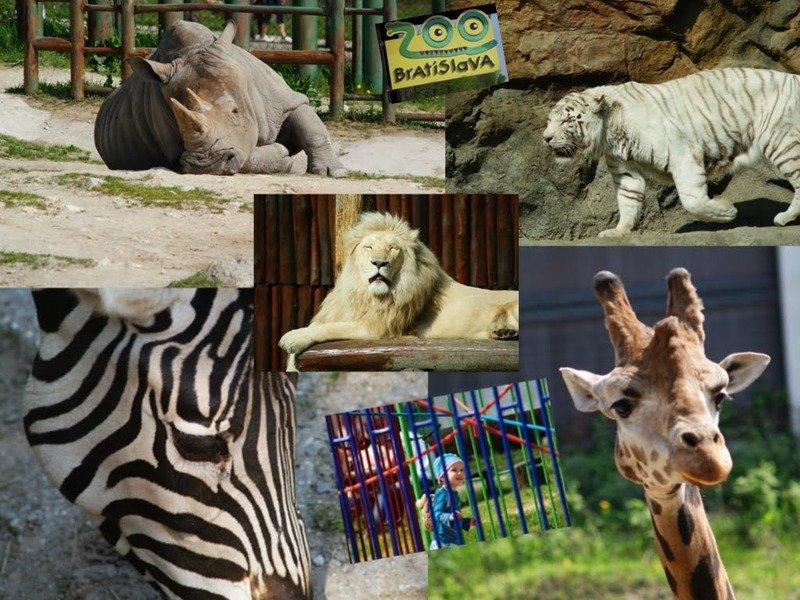 2020. május 30. A Pozsonyi állatkert és a Dínópark Hauswirth Csokoládégyárral / fő