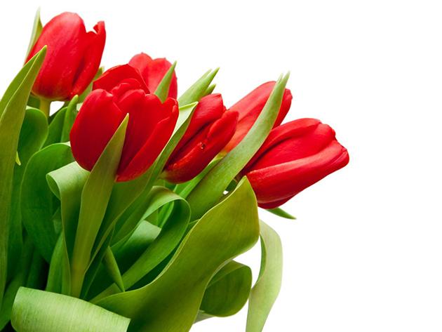 Tulipán kompozíció kerámia kaspóban