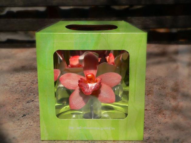 Dobozos orchidea (1 szál), vágott orchidea virág