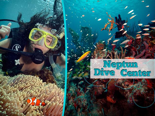 Fedezd fel a lenyűgöző víz alatti világot! - Tengerbiológia tanfolyam és búvár próbamerülés a Neptun búvárközpontban!