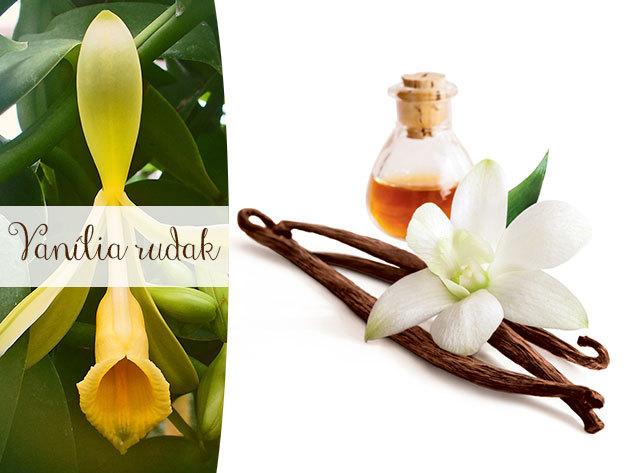 Bourbon vanília rudak Ugandából - 25 g, 5-8 szál, 100% tisztaságú fűszer
