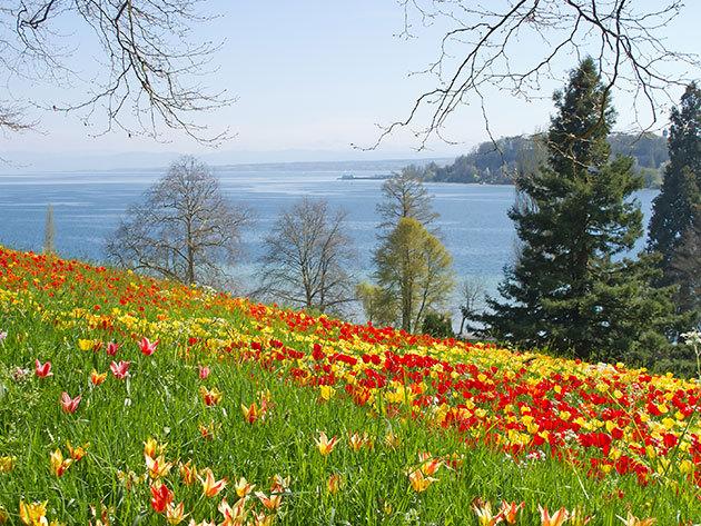 Mainau virágsziget, Meersburg, Bodeni-tó / non-stop autóbuszos utazás május 9-11. /fő
